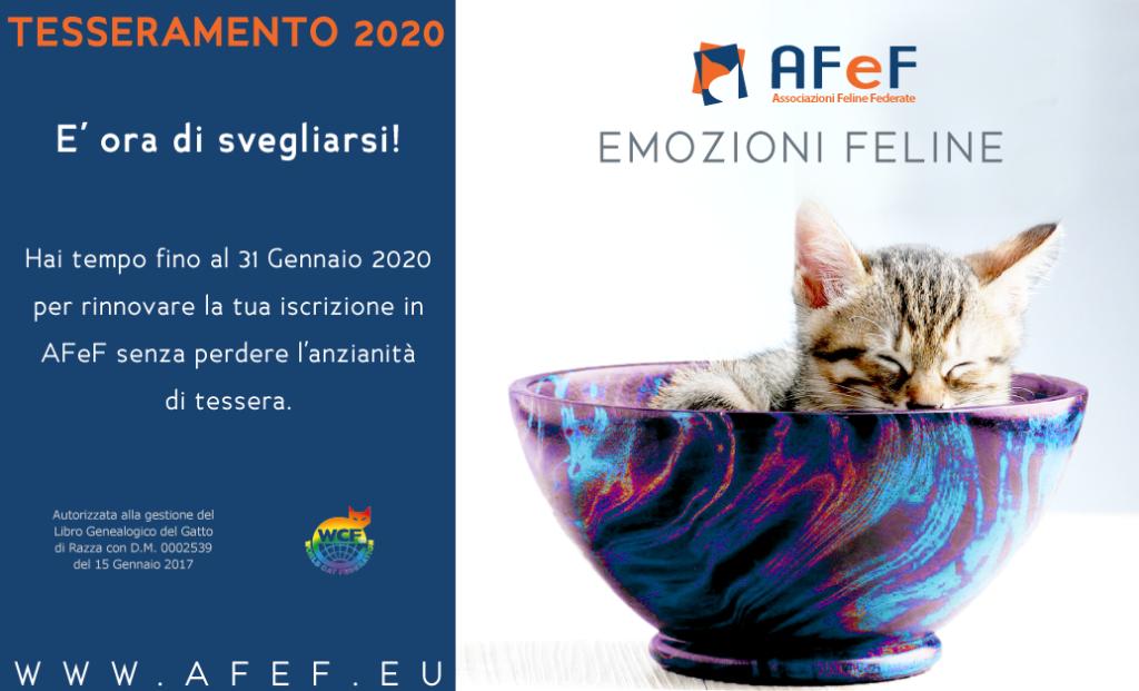 Tesseramento 2020, iscriversi in AFeF