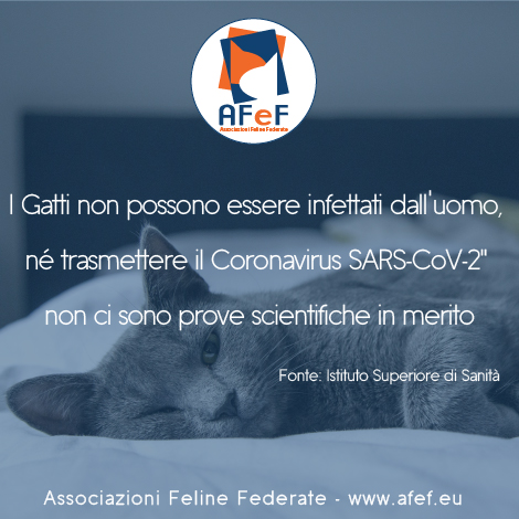 comunicato ISS AFeF