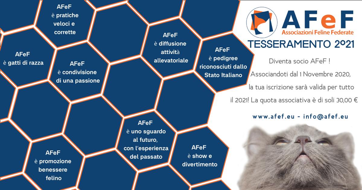 afef associazione felina autorizzata pedigree gatti di razza tesseramento 2021 afef associazioni feline federate