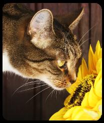 webinar afef on air laura cutullo omeopatia terapie naturali associazione gatti di razza