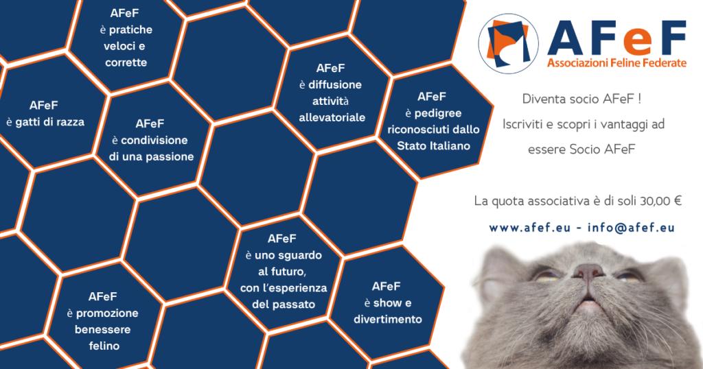 afef associazione felina autorizzata dal ministero pedigree gatti di razza italia