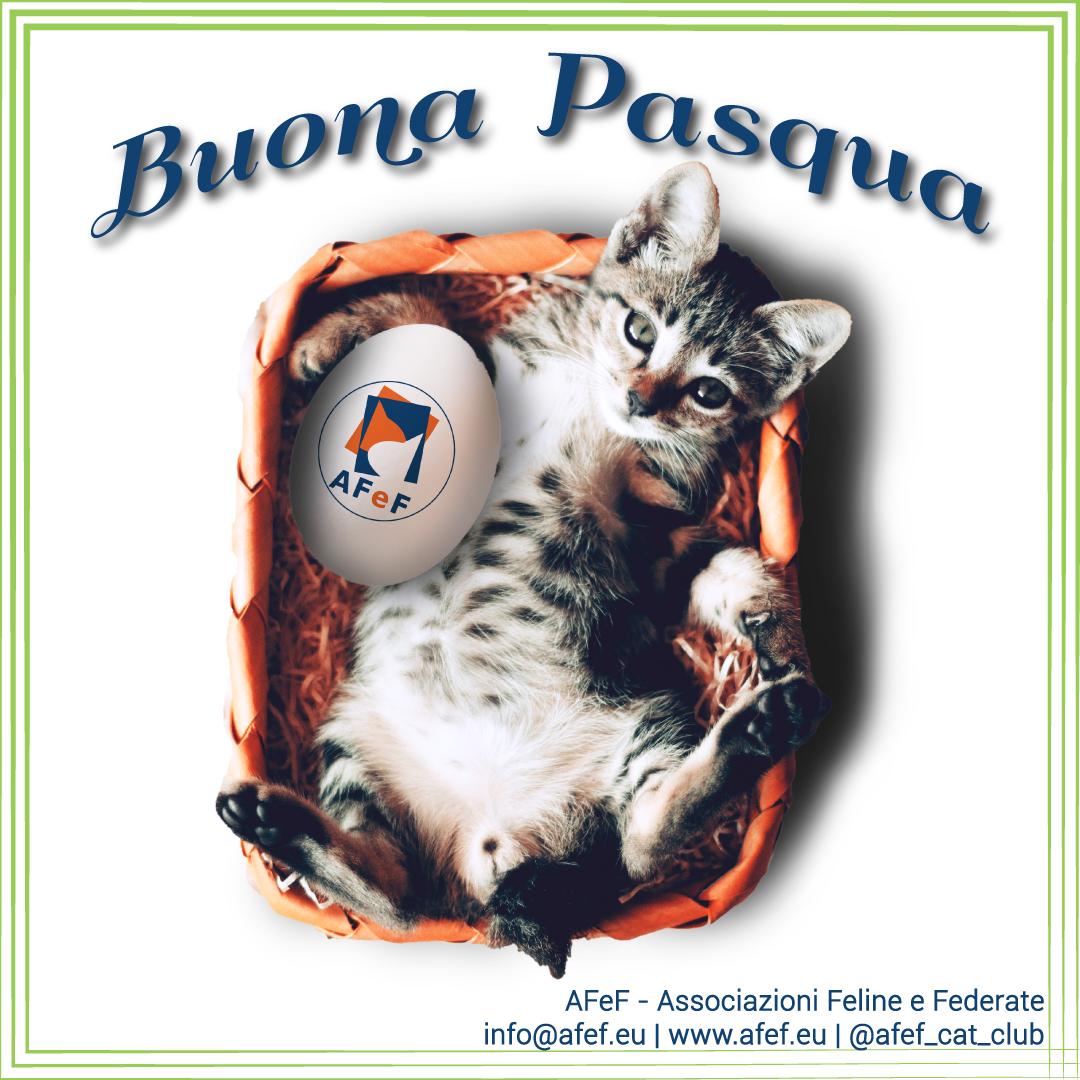 buona pasqua 2021 afef associazione riconosciuta ministero pedigree gatti autorizzati legali