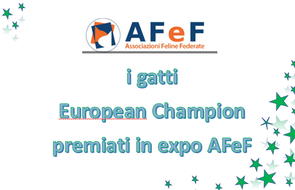 I gatti AFeF Campioni d'Europa