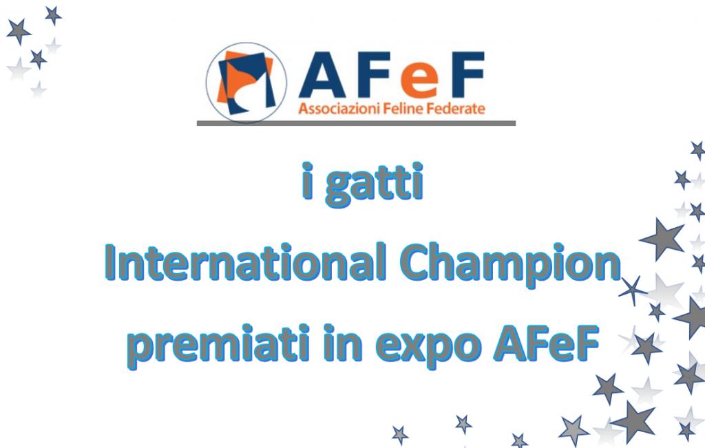 Gatti international Champion premiati in AFeF