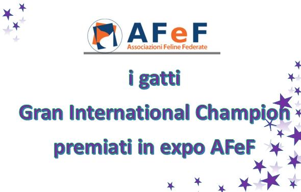 I gatti gran campioni internazionali premiati in expo AfeF